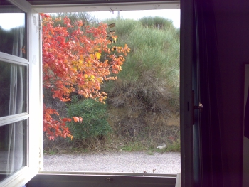 window-autumn.jpg